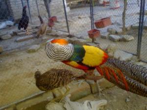 Lahore zoo birds