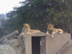 Lahore zoo pakistan