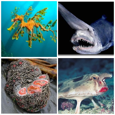 10 Bizarre Animals You Need To Know Right Now