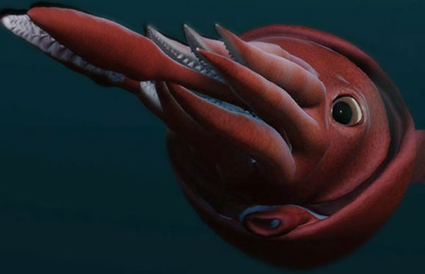 10 Beautiful Ocean Creatures In The World-Colossal Squid