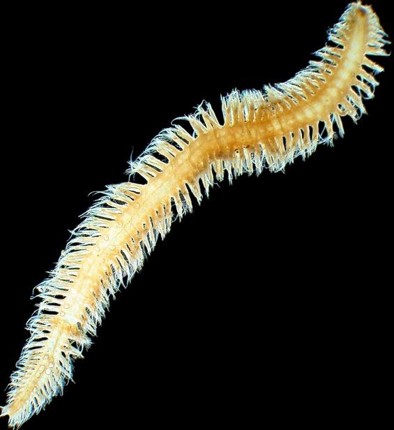 10 Hard To Believe Deep Sea Animals