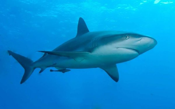 10 Surprising Mayans Facts Ever Found In The World-Sharks